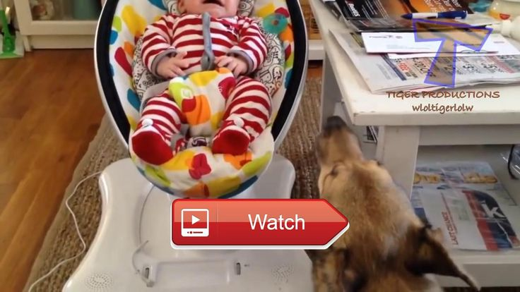 🐶 Funny dogs and babies talking Cute dog baby compilation Funny dogs and babies talking Cute dog baby compilation Watch this funny cat…