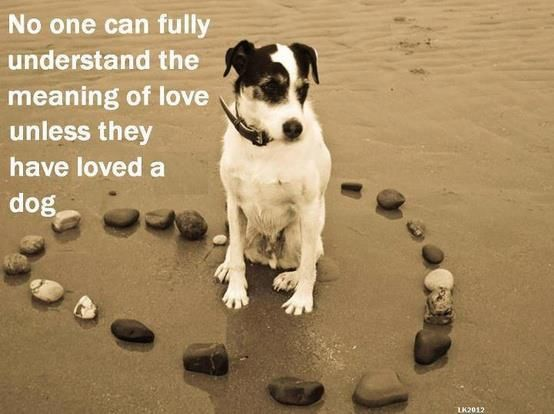No one can fully understand the meaning of love unless they have loved a dog.... amen!