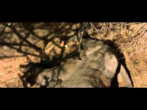 W pustyni i w puszczy [CAŁY FILM] - YouTube