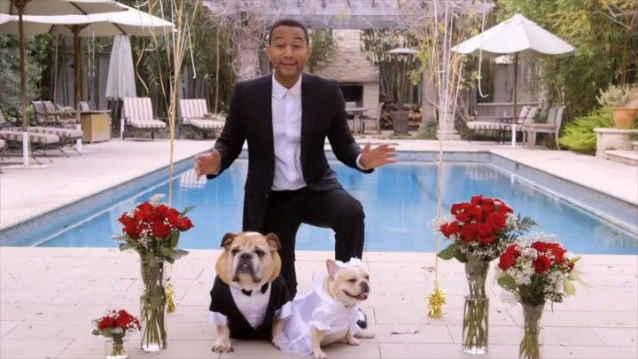 John Legend married Puddy and Pippa, the English and French Bulldogs belonging to himself and his wife, Chrissy Teigen. The ceremony was a promotion to raise money for his charity, The Show Me Campaign, whose goal is to provide all children with quality educations regardless of their family income.