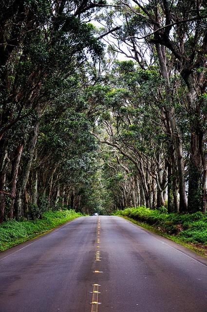 Tree tunnel in Kauai...my favorite drive