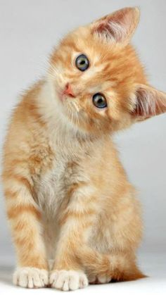 sweet kitty.... <3