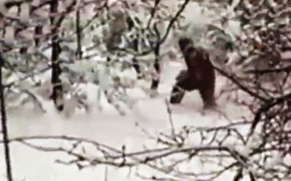 the quest for better pictures and videos of Bigfoot, Yeti, Almasti and their counterparts got a new entry this week from Adygeysk, Russia. That's where a local mountain rescue team, after getting calls of Yeti sightings in the Adygeysk area, went out to investigate.