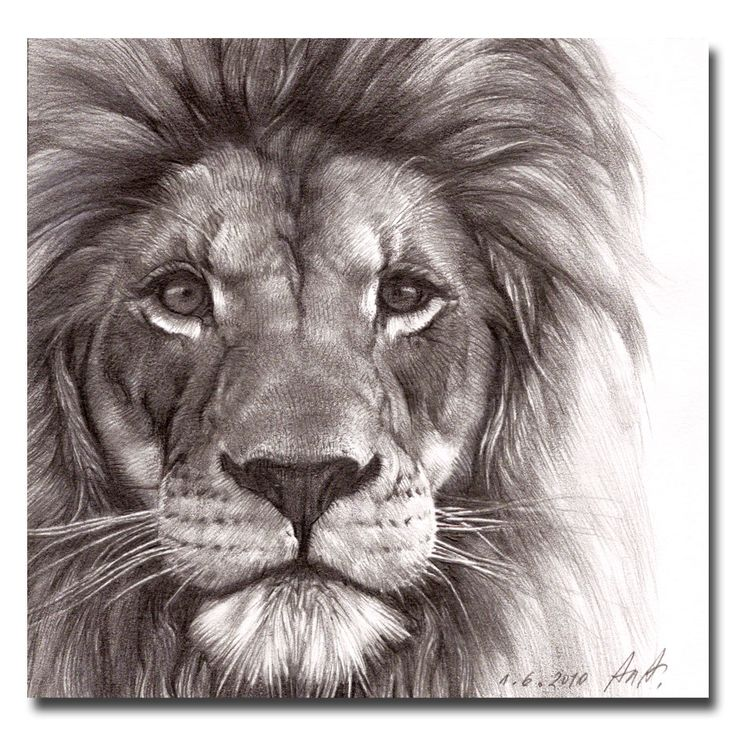 Lions face drawing - photo#1
