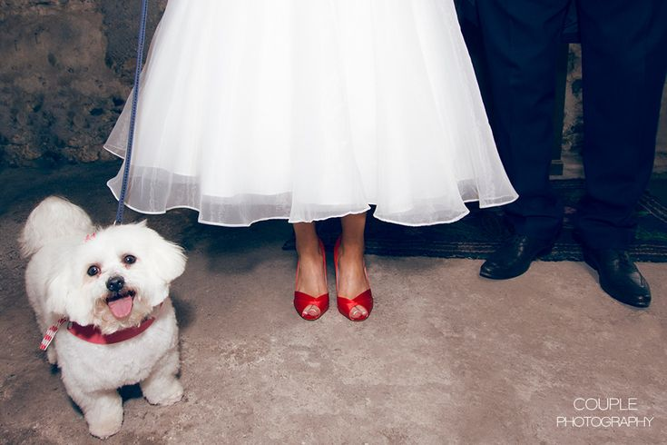 Quirky bride & groom with their dog. Irish Marquee weddings photographed by Couple Photography.
