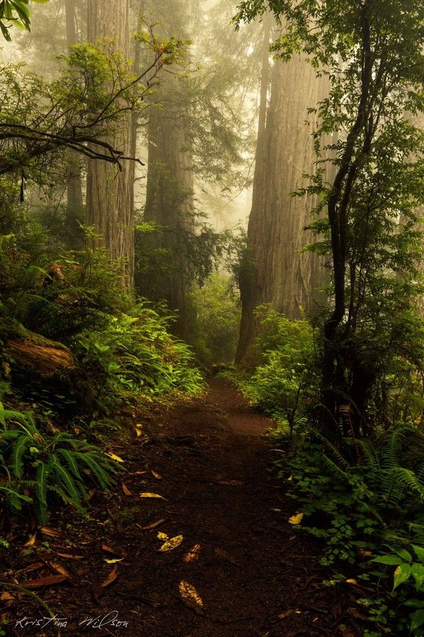 Million Years by Kristina Wilson on 500px Redwoods near Crescent City, CA