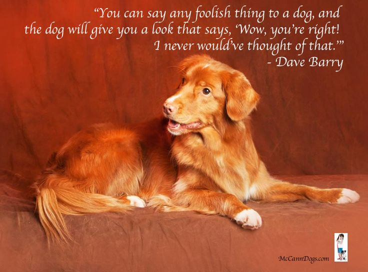 """""""You can say any foolish thing to a dog, and the dog will give you a look that says, 'Wow, you're right! I never would've thought of that."""" - Dave Barry"""
