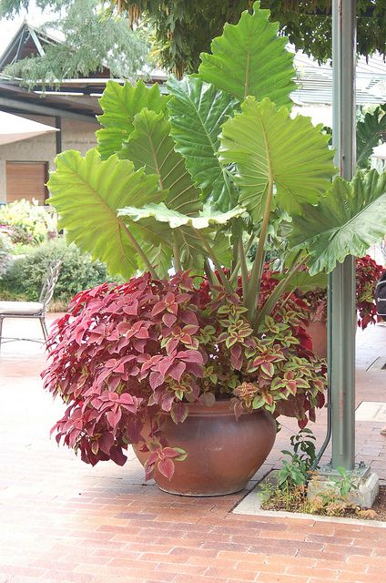 Colorful container for the back patio.