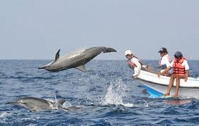 Shoot thrilling Dolphins somersaults on your camera as these gentle creatures play. Dolphin spotting is a popular activity carried out along the full 110 kms stretch of coastal Goa with a great fun and enthusiasm