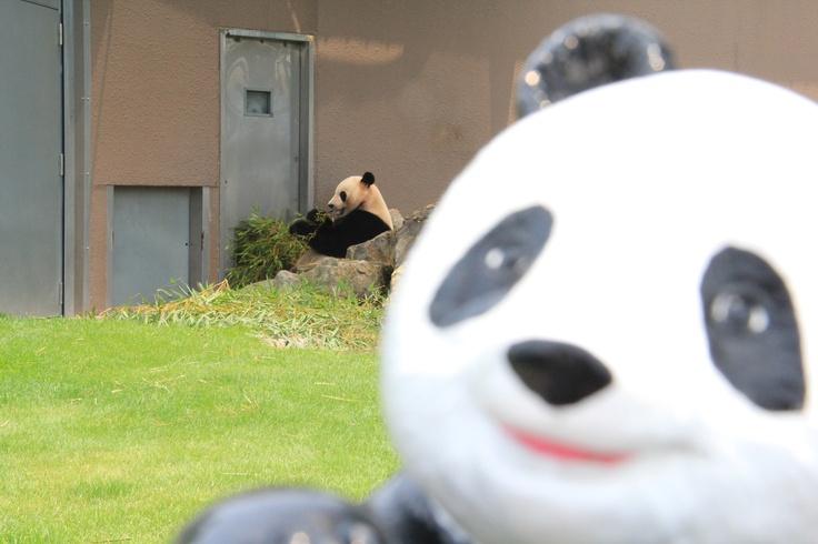 Wakayama_Shirahama 20120528-29