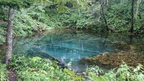北海道の神の子池。倒木が朽ちることなく水が透明で美しい所です。