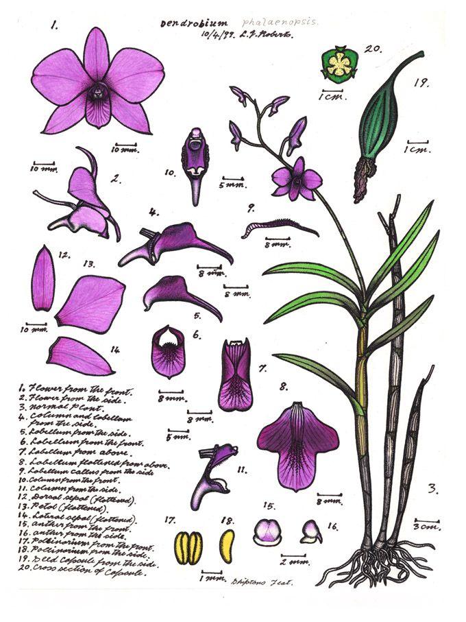 104 best ❀✿❀✿ ❧ Orchidea ❀✿❀✿ ❧ images on Pinterest ...