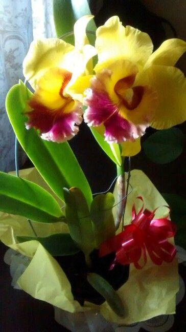 Mom's orquids