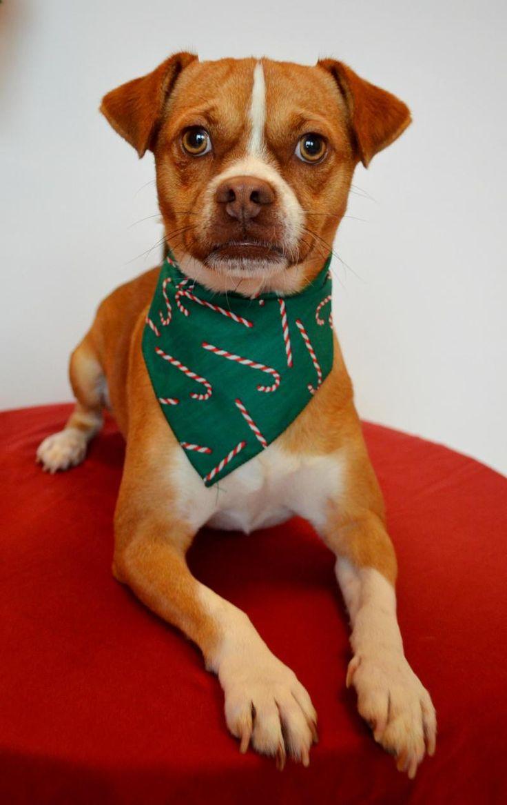 Adopt Boise on Pet adoption center, Pet adoption, Adoption