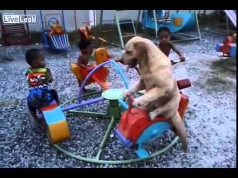 Así se divierte este perrito sentado con mucha elegancia en un carrusel