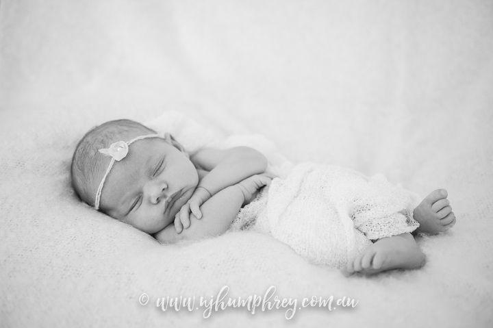 Baby danika studioyorknewborn photographernewbornsphotographersbabyphotographers