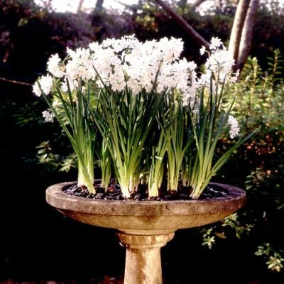 Bulbs: The glass totems with a bowl on top filled with river rocks and bulb flowers. Paper whites, tulips, or daffodils