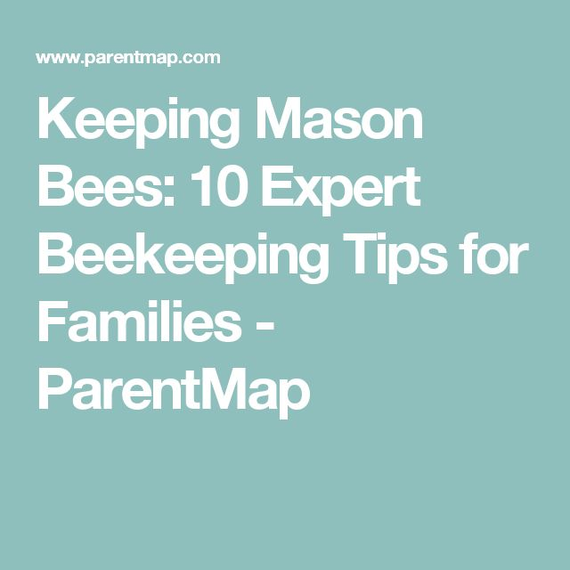 Keeping Mason Bees: 10 Expert Beekeeping Tips for Families - ParentMap