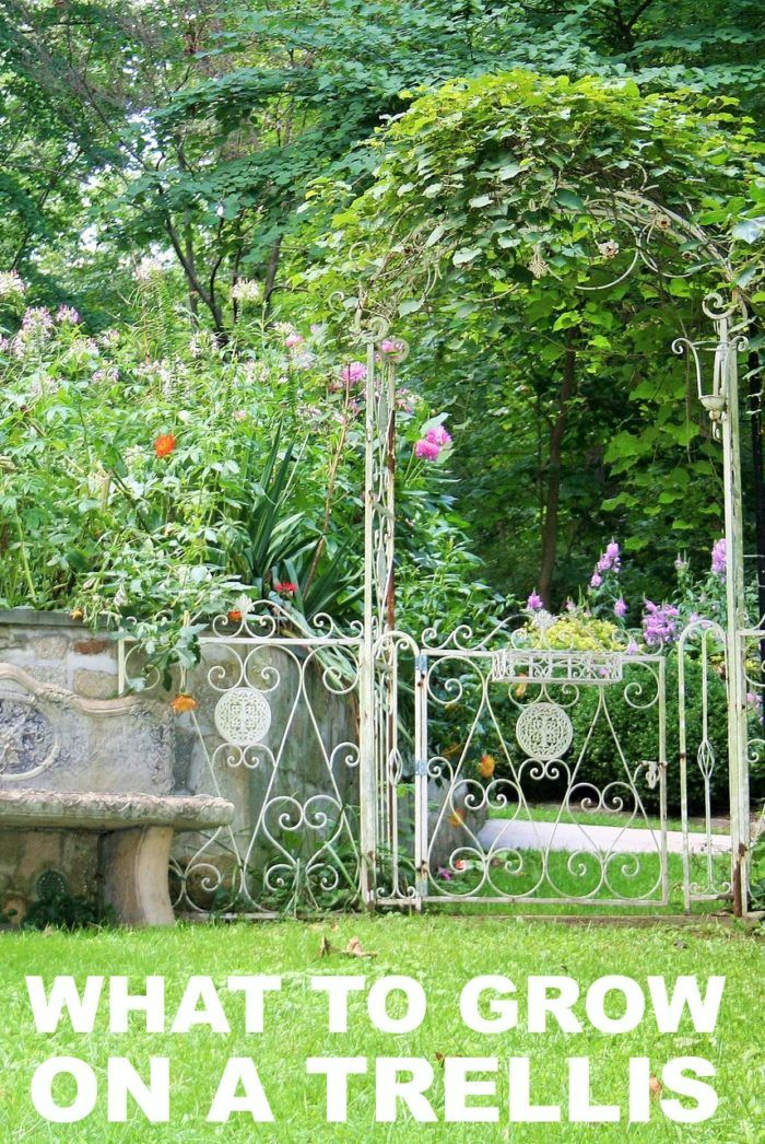 the best plants to grow on a trellis prayer gardenflower