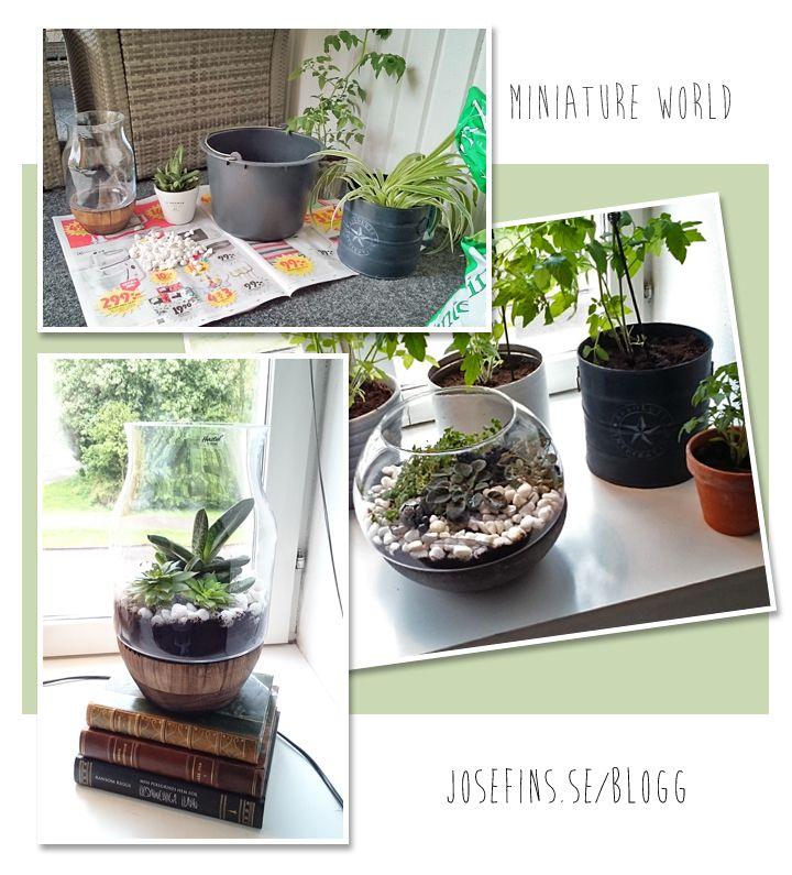 """Mini world! Inspired by Pinterest """"pinners"""". #diy #succulent #green #homedecor #suckulenter #plantering #indoor #indoorgarden #inomhus #inredning"""