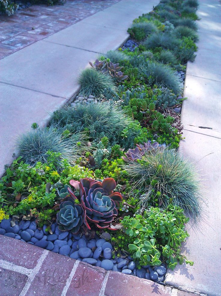 Pop plants (in this case succulents) in this middle of the driveway slabs for a bit of interest, colour and texture.