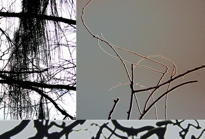 FROM AUGUST 2005  On my travels around the world i photograph trees and other natural forms. They have interesting rythems/textures when tweaked and put together. Nature's a greate inspiration in my work. This is a Vancouver tree with a twig from L.A. an a touch of local bush
