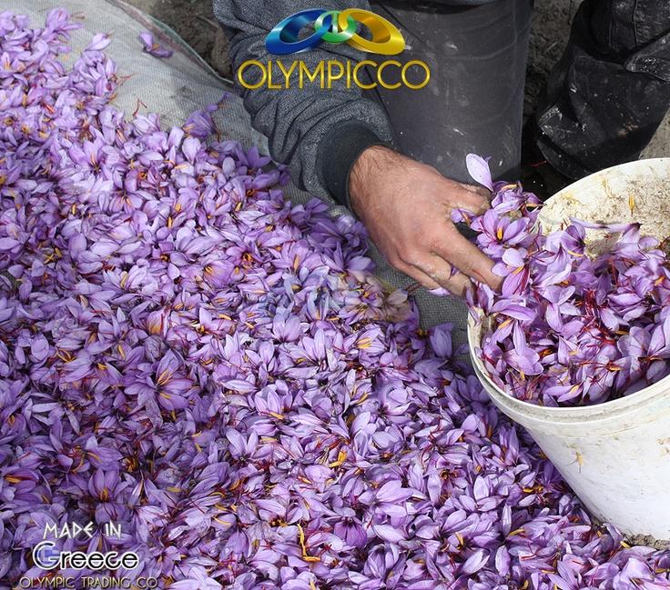 Saffron One Love