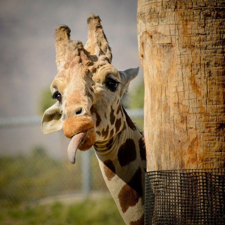 Hidden Giraffe Jerusalem House