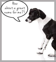 Boy Dog Names title Image