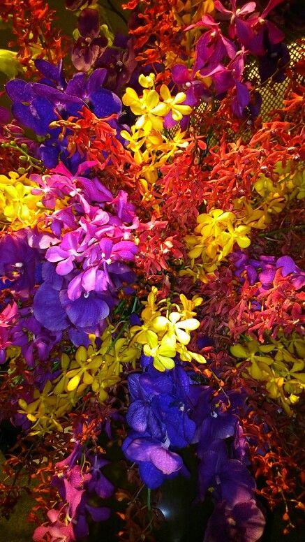 Flowers of Taipei