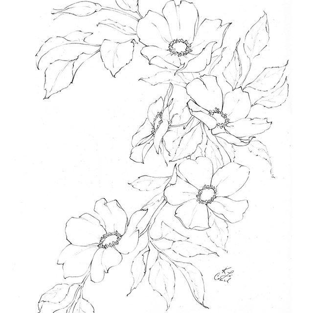 Floraldrawingchallenge Hashtag On Instagram Photos And Videos Blumenzeichnungen Blumen Zeichnung Blumen Bleistiftzeichnungen