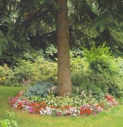 easy directions on filling in the space under shade trees...but plant something other than hosta and impatiens.  Good list of other plants