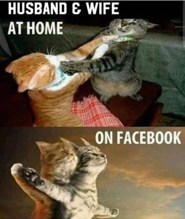 Funny Husband Wife Meme Funny Cat Memes Funny Animal Images Funny Animals