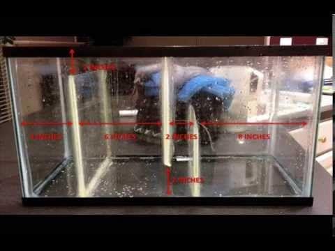 Diy Freshwater Filtration Sump Tank Youtube Aquariums