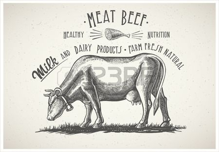 Koe in grafische stijl, afbeelding gemaakt van de hand tekening. Stockfoto - 54675544