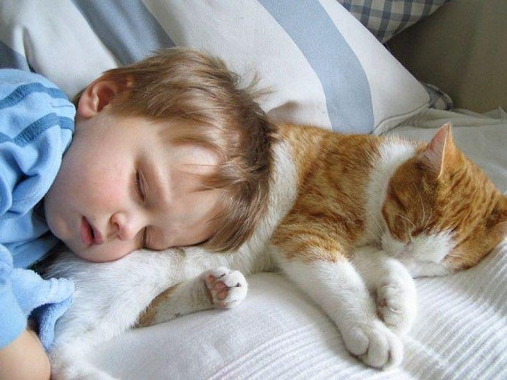niño dormido sobre su gato en una cama