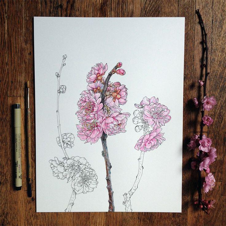 Fleurs en Progression par un Illustrateur Scientifique (6)