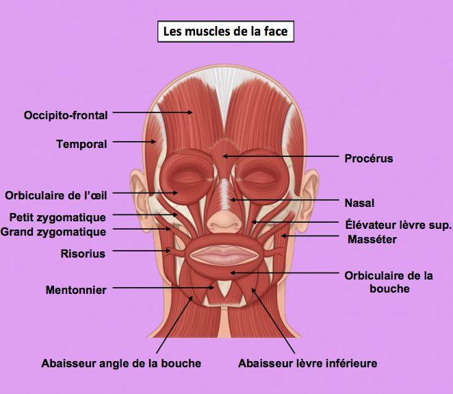 Amazon Fr Alphabet Du Faux Mouvement Et Metanoia Secrets D Anatomie Andreani Philippe Livres