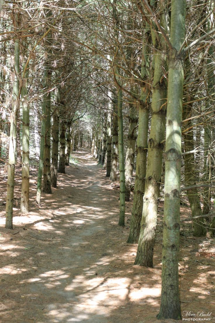Hiking Trails Ontario, Bruce Trail Hiking Things to Do in Caledon, Ontario…