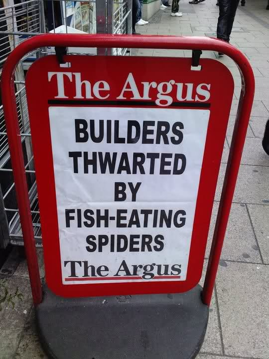 The wonderful Argus headlines in Brighton