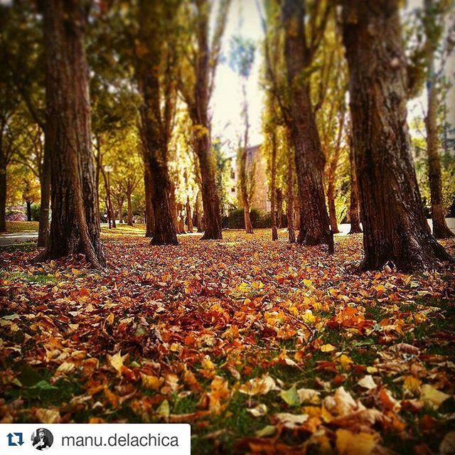 Universidad de Navarra @universidaddenavarra By @manu.delachic...Instagram photo | Websta (Webstagram)