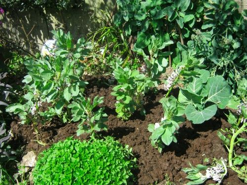 Permaculture Courses Mulching in the Garden: Essential Permaculture? » Permaculture Courses