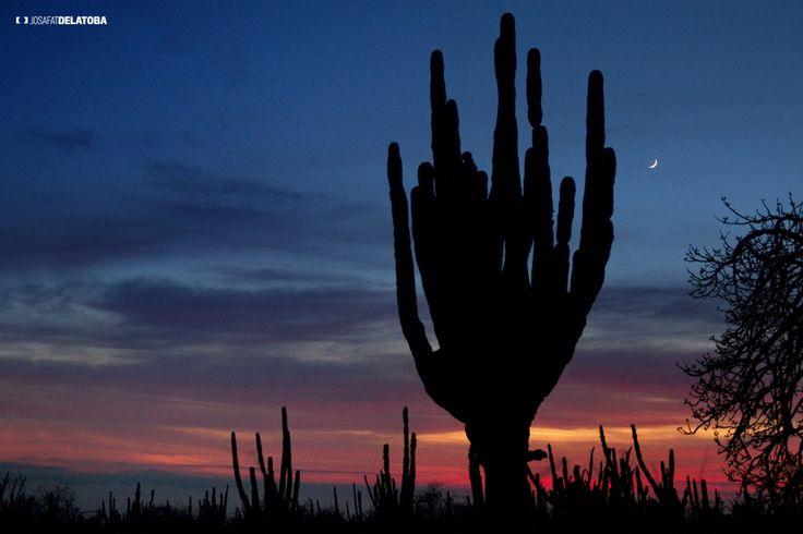 Sundown in La Baja desert #weddingsincabo #cabophotographer #loscabos #josafatdelatoba # #mexico #bajacaliforniasur #desert #cactus