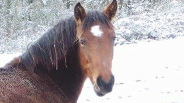 Isn't she beautifull?! Our sweet foal Novi also called Novelle #horse #foal #mare #Novi #vanHaflonie #love