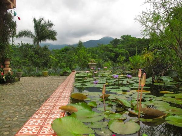 33 best images about have to love puerto vallarta on - Puerto vallarta botanical gardens ...