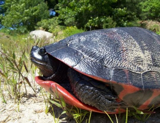 64 best images about turtles on Pinterest | What turtles eat, Pets ...