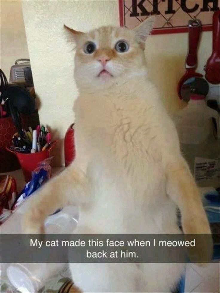 Meowing back at your cat. You probably just said something very mean in cat language. Funny cat