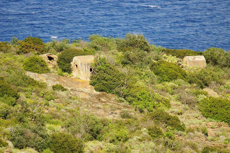 isola del giglio - macchia