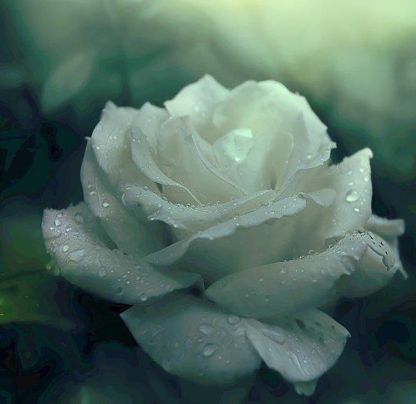 Las verdades, como las rosas, tienen espinas; recíbelas por la parte de la flor y no te pincharás.  Salvador Polo De Medina
