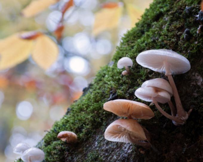 Los hongos, aunque no pertenecen al reino animal, son determinantes en el mantenimiento de los ecosistemas. Son los máximos recicladores de los restos orgánicos en descomposición, además de proporcionar agua y minerales a las plantas a través de sus raíces.El ser humano no podría sobrevivir sin ellos, ya que en su organismo habitan hasta 80 tipos de hongos diferentes y todos ellos desempeñan un papel fundamental en la salud.Hongos